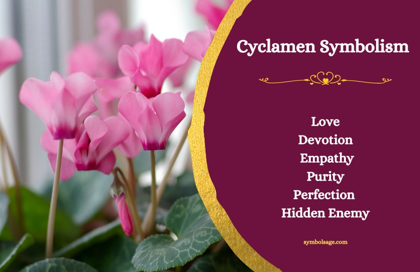 Symbolism and meaning of cyclamen