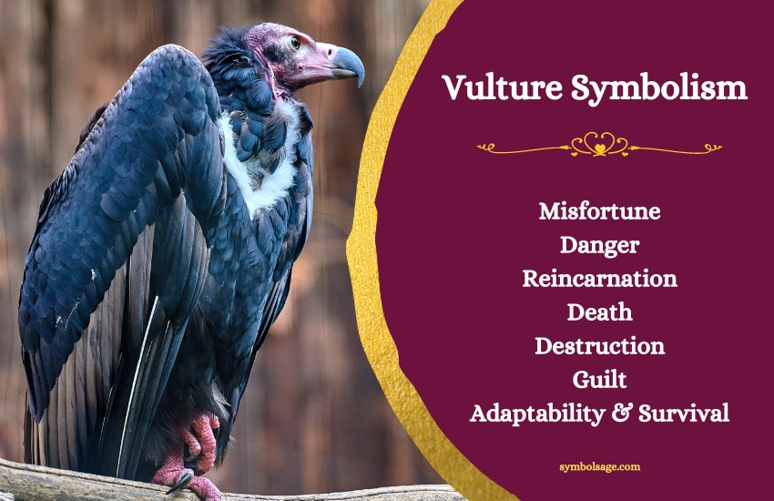 Vulture meaning and symbolism
