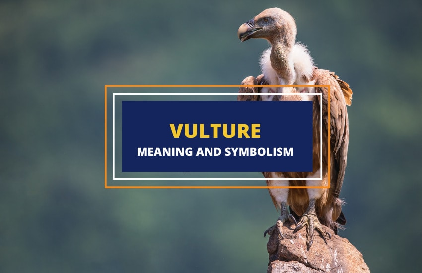 What does a vulture symbolize