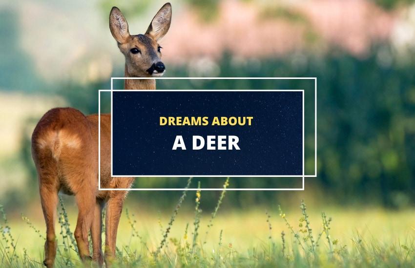 Dreams about Deer