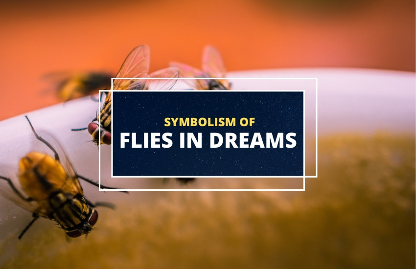 Dreams About Flies Meaning
